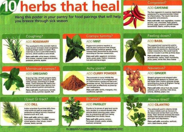 Herbs that Can Heal ~
